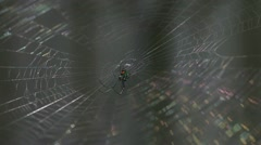 Light reflects on a spider in his web - stock footage