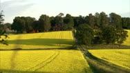 A field of oilseed rape Stock Footage