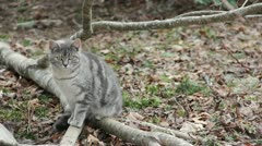 Feral Cat Stock Footage