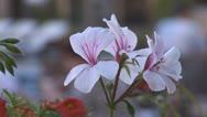 Flowers 1 Stock Footage