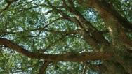 Stock Video Footage of Brazil: Amazon flora 3