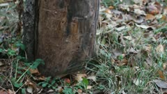 An old stump Stock Footage