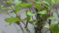 Green leaves on the bush Stock Footage