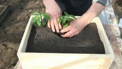 Planting of three seedlings Stock Footage