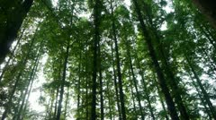 Stock Video Footage of Panoramic of trees crown,forest,jungle,shade shadow.