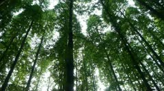 Panoramic of trees crown,forest,jungle,shade shadow. Stock Footage