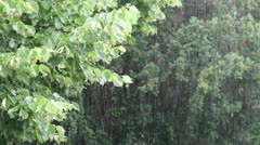 Pouring Rain Stock Footage