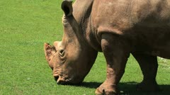 Rhino five Stock Footage