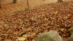 A couple running and playing in a forest during autumn Stock Footage