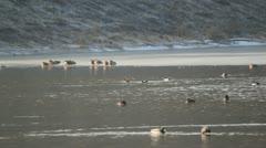 winter lake - stock footage