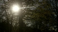 Trees against the light Stock Footage