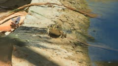 Frog catching a fly Stock Footage