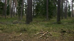 Tree trunks in a forest, Stockholm Stock Footage