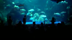 Fishes in Sea World Stock Footage
