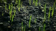 Green grass sprouts Stock Footage