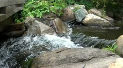 Small-creek-waterfall Stock Footage