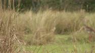 Brazil: Amazon river region birds 10 Stock Footage