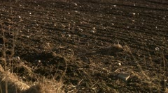 View of farming land - stock footage