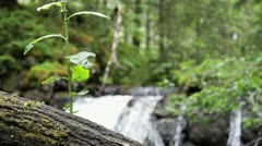 Nature dolly shot waterfall - stock footage