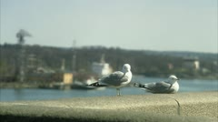 Seagulls in front of a city Stock Footage