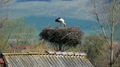 Stork on nest Stock Footage