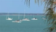 Stock Video Footage of Boats and yachts with trees in foreground