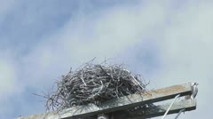 Osprey Entering and Leaving Nest Stock Footage