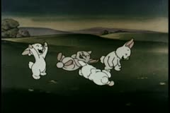 Wide shot laughing rabbits - stock footage
