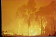 Panning raging forest fire - stock footage