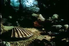 Fish speeding past clam with pocket watch inside shell Stock Footage