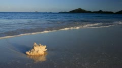 Sea Shell by the Sea Stock Footage