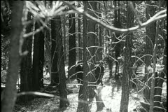 Soldiers cautiously walking through forest Stock Footage