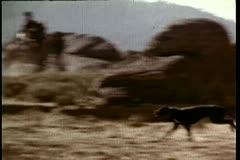 Panning a large black dog running on mountain range Stock Footage