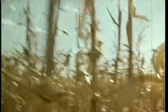 Point of view of person walking through crops Stock Footage