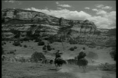 Rear view of men on horseback herding cattle Stock Footage
