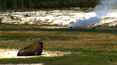 Bison, Grand Teton National Park, USA Stock Footage