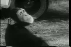 Monkey doing back flip Stock Footage