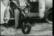 Stock Video Footage of Wide shot happy monkey dancing  by safari truck
