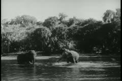 Long shot elephants bathing in river Stock Footage