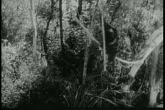 Monkey running through jungle Stock Footage
