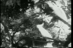 Montage wild animals in Africa Stock Footage