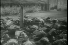 Historical reenactment World War II dead prisoners on ground Stock Footage