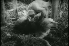 Monkey examining dog's fur Stock Footage