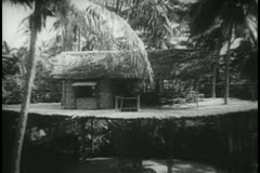 Wide shot of tropical tree house Stock Footage