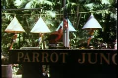 Trained parrot raising the American flag Stock Footage