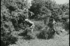 Men clearing away trees to make a path Stock Footage