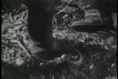 Close-up of boots stomping snake Stock Footage