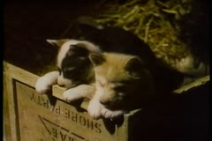 Two puppies in wooden box Stock Footage