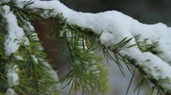 Snowy Pine Limb Stock Footage