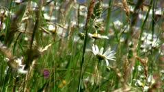 Swaying grass and flowers Stock Footage